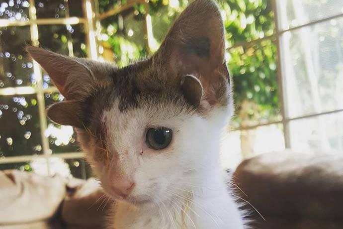 gattino-4orecchie