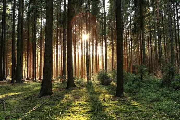 legge foreste 2018 3