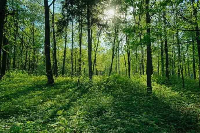 legge foreste 2018 4