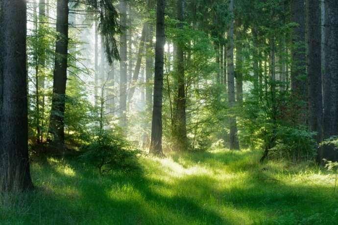 testo unico forestale approvazione 2018