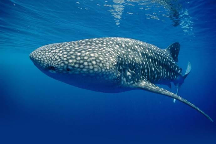 microplastiche animali marini