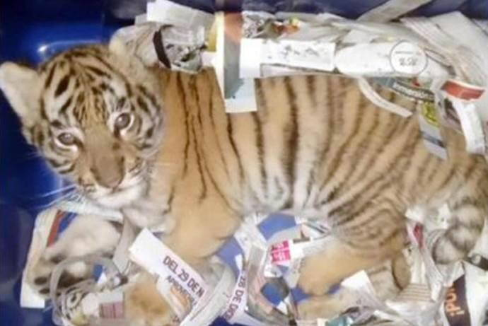 tigre-pacco-postale
