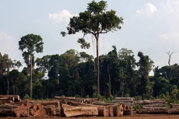 amazzonia 3
