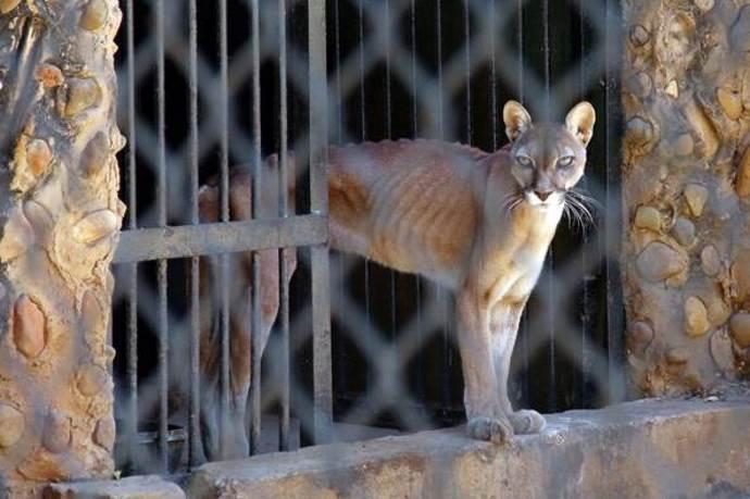 animali-zoo-venezuela
