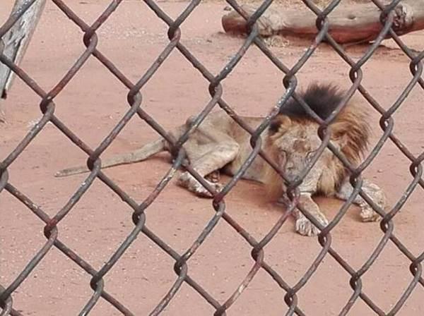 animali zoo venezuela1