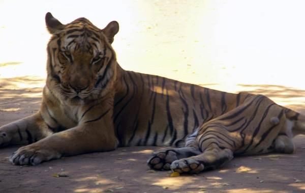 animali zoo venezuela2