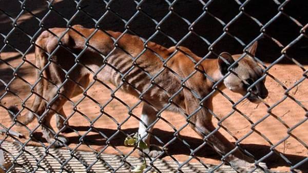 animali zoo venezuela3