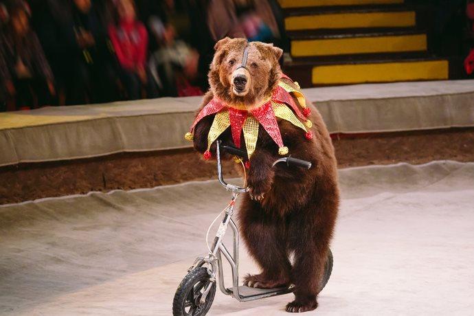 circo animali scuole