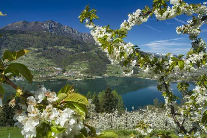 fioritura Trentino cover