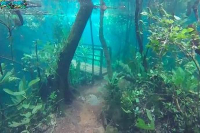 foresta-pluviale