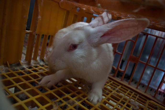 macello-conigli