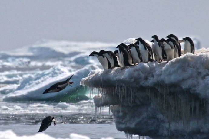 pinguini Antartide