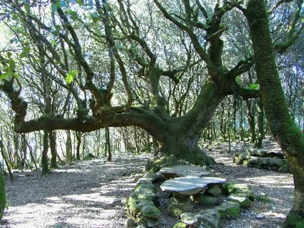 alberi monumentali sardegna2
