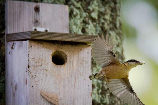 birdwatching santegle