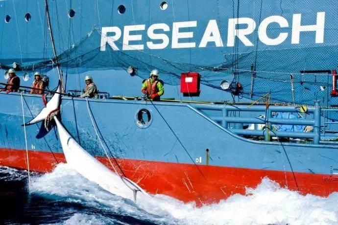 caccia-balene