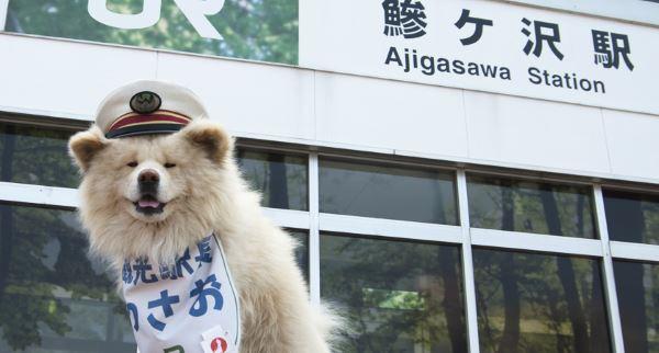 cane capostazione wasao2