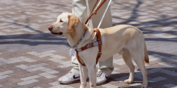 Risultati immagini per cane guida site:greenme.it