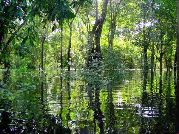 foresta amazzonica colombia