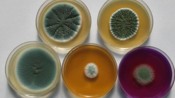 funghi micotica