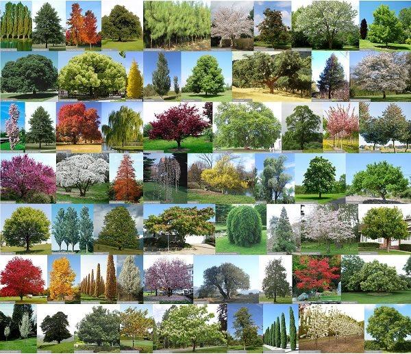 grab tree