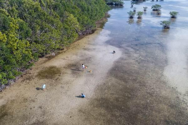 mangrovie uragano1
