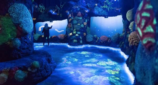 ocean acquario