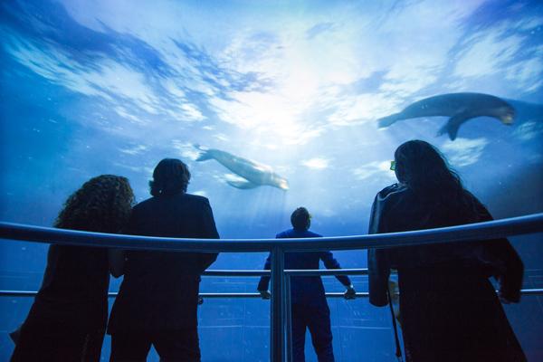 ocean acquario2