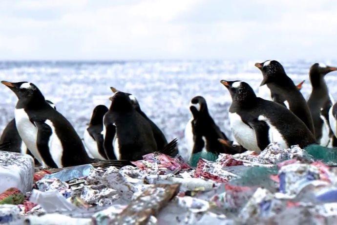pinguini isola di plastica