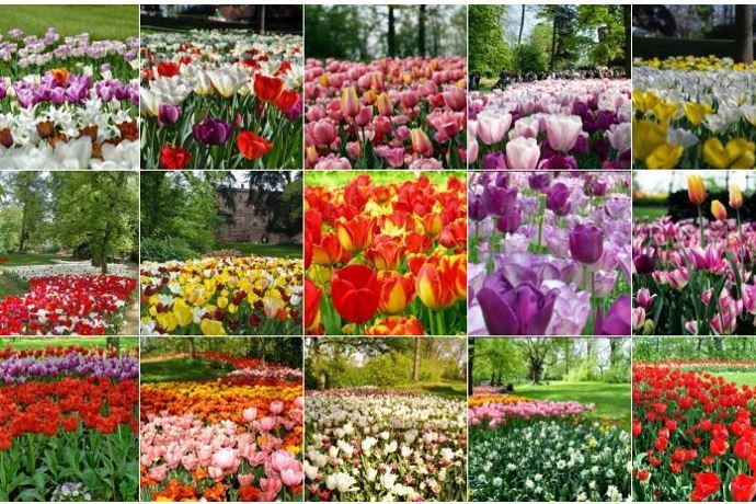 tulipani_castello_pralormo
