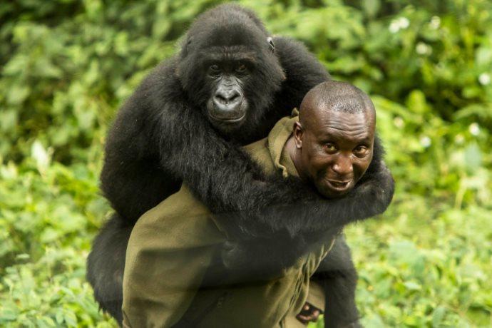 ranger uccisi Congo