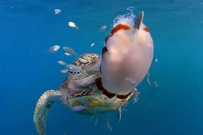 tartarughe marino