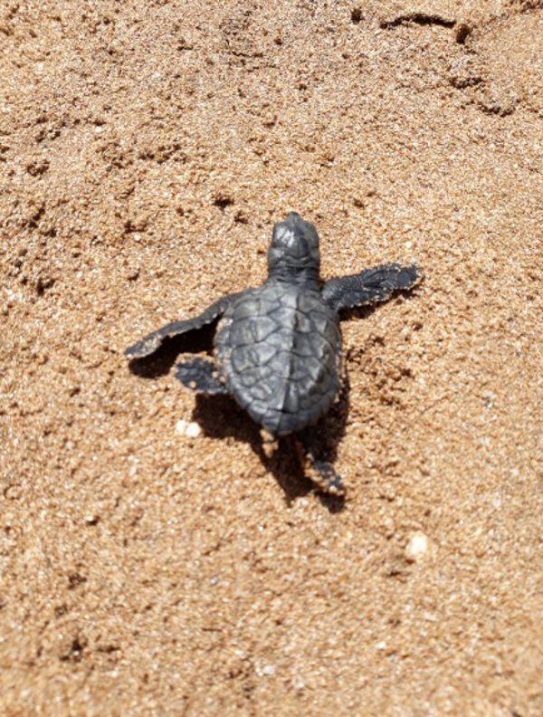 tartarughe versova 4