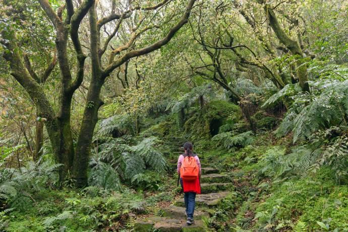 trekking-piante