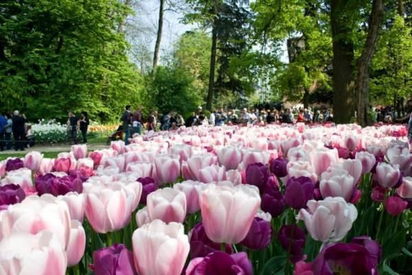 tulipani castello pralormo2