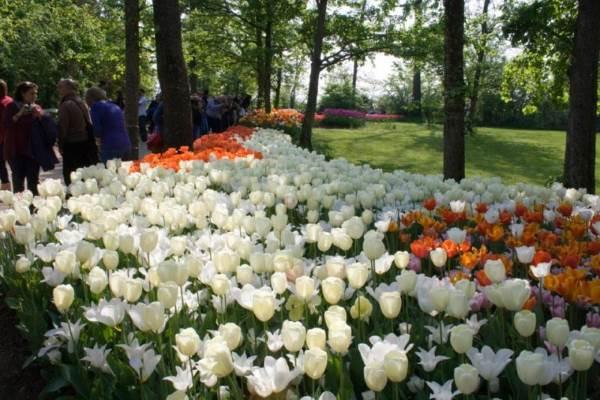 tulipani castello pralormo3