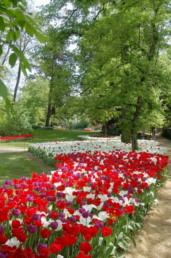 tulipani castello pralormo5