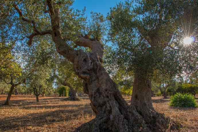 decreto xylella 2018 agricoltura biologica