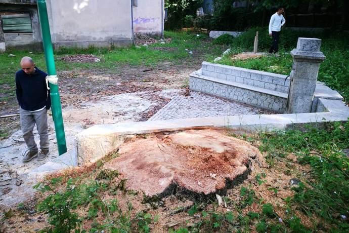 alberi monumentali abbattuti calabria