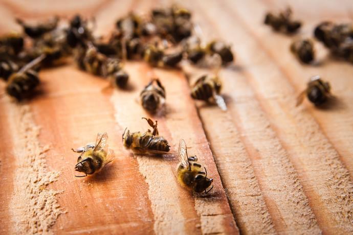 strage api friuli pesticidi vietati