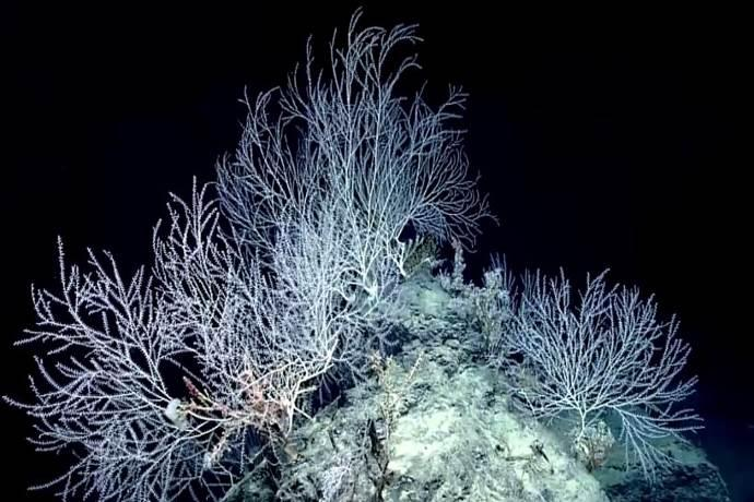 corallo-bambu