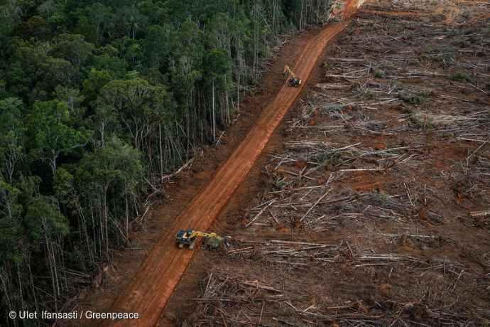 Foreste indonesia