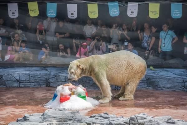 inuka orso