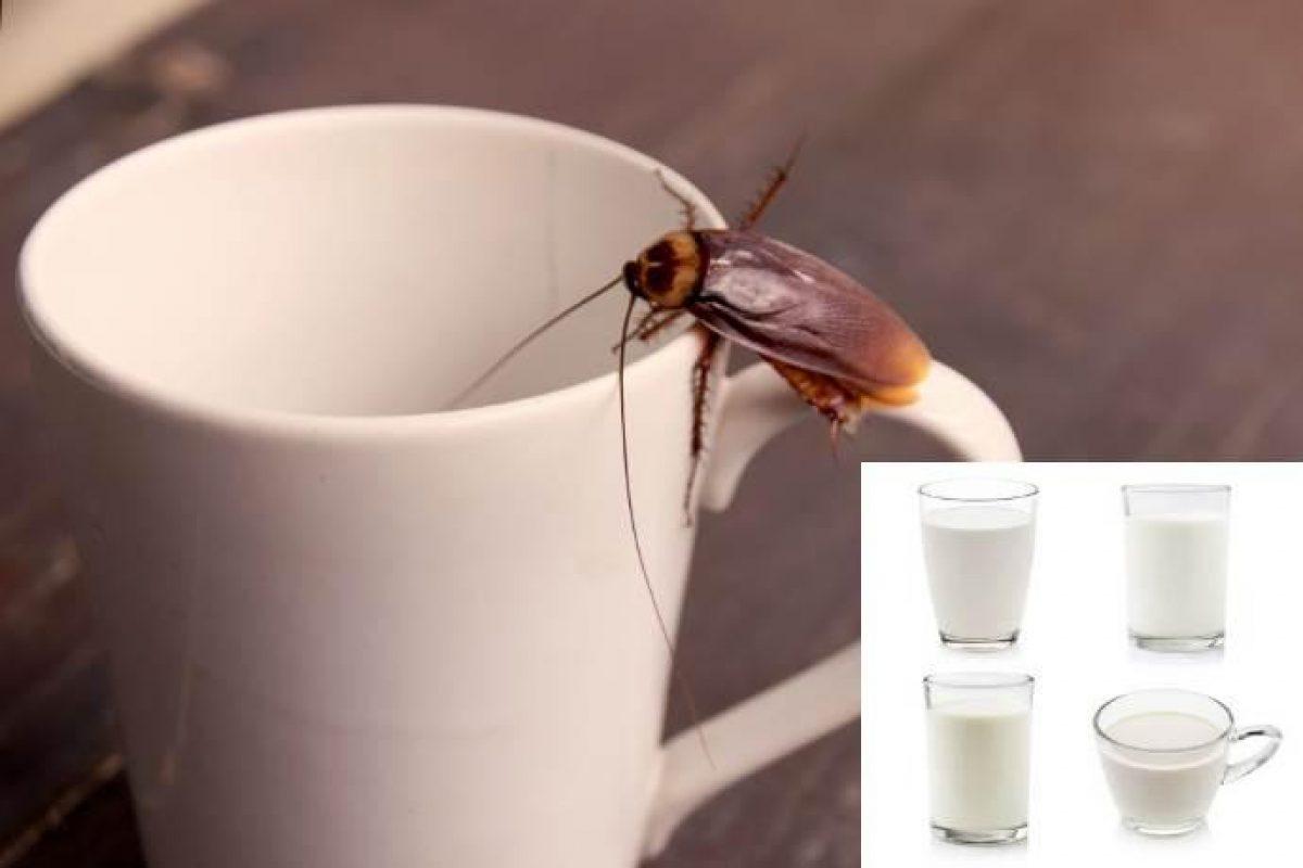 Piccoli Scarafaggi In Cucina latte di scarafaggio: siete pronti per il superfood del