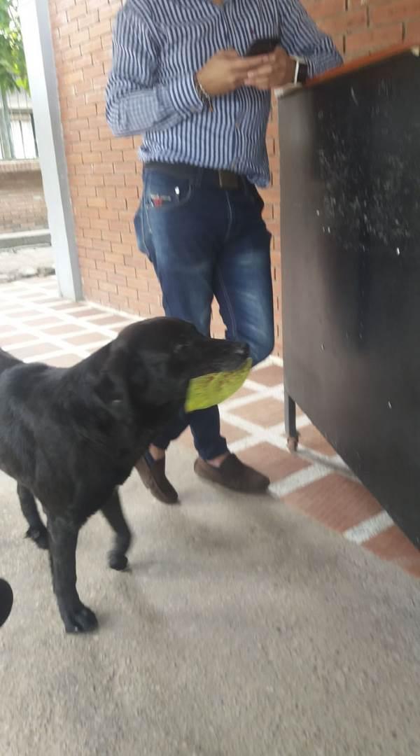 negro cane foglie1