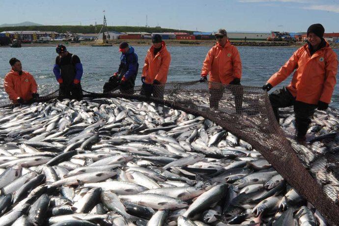 pesca salmoni
