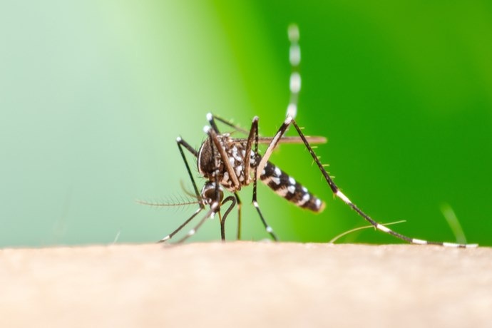 dengue Archivi - GreenMe it