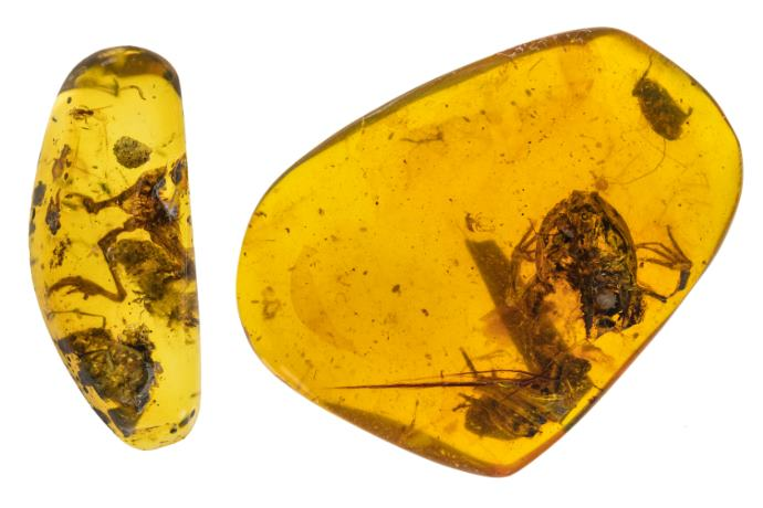 fossile rana ambra foresta pluviale