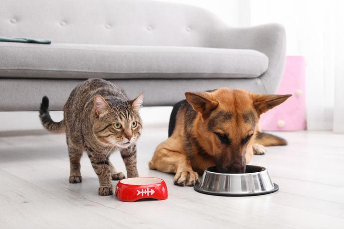 cani gatti cibo
