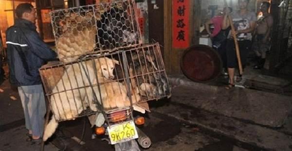 carne cane yulin1