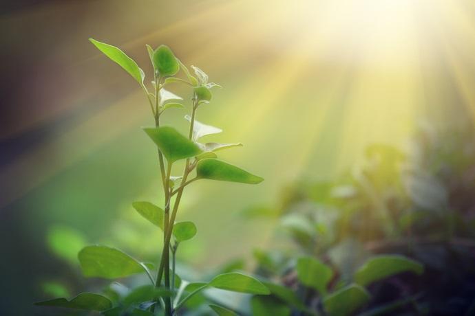 fotosintesi oltre il limite rosso